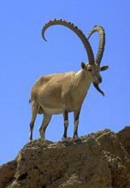 фото тур золотые рога