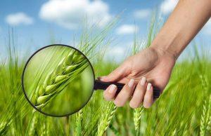 Экзотические растения, которые укрепят ваше здоровье